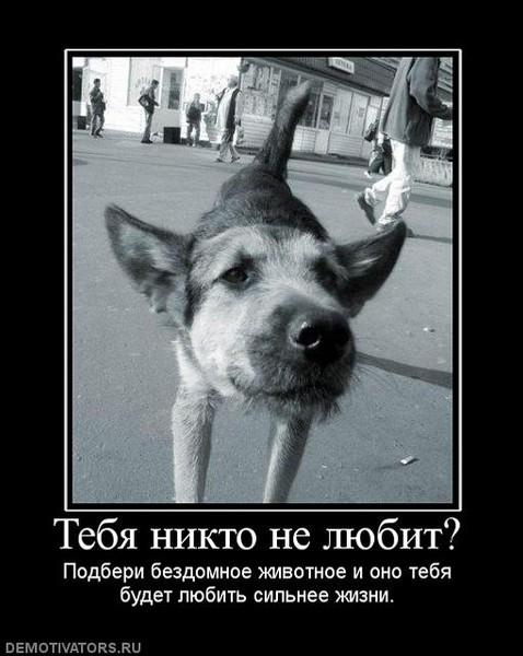 Печальные картинки о животных